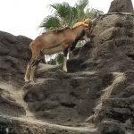 天王寺動物園2🐂